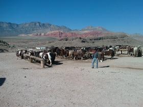Red Rock Horseback ride