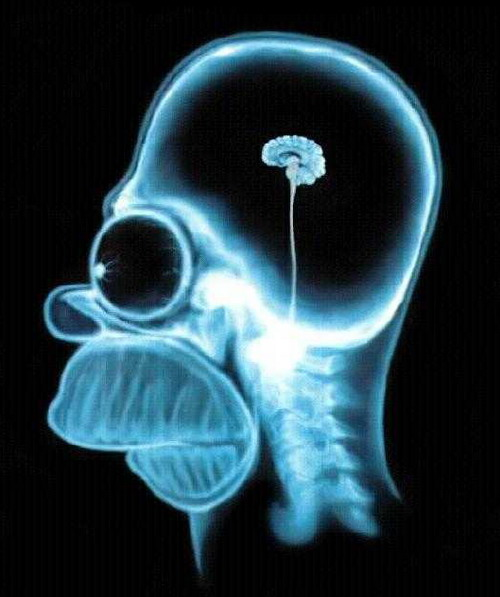 mužský mozek